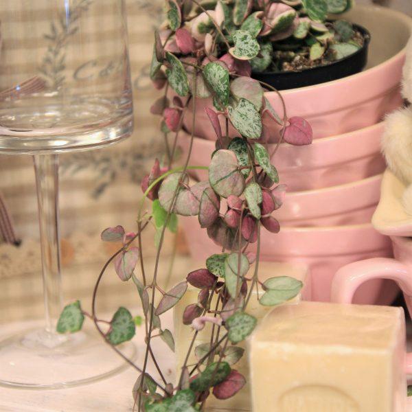 vazonas alessi ceropegia woodii vazone keramikinis pot ceramic vaza vase gėlės ir manufaktūra augalai kambariniai