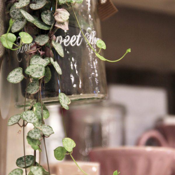 Echeveria kompozicija vazonas alessi ceropegia woodii vazone keramikinis pot ceramic vaza vase gėlės ir manufaktūra augalai kambariniai