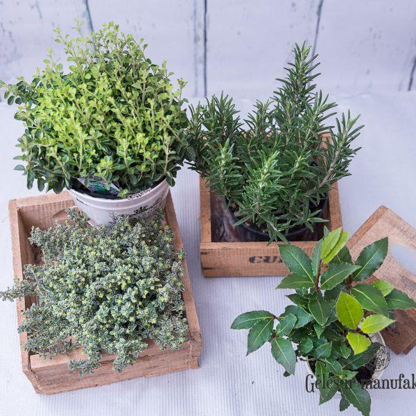 herbs origanum thymus laurus lauramedis prieskoniai