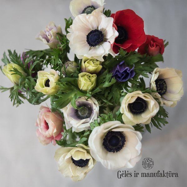 anemone mistral red black plukė raudona flowers gėlės ir manufaktūra valentino diena aguonos aguona