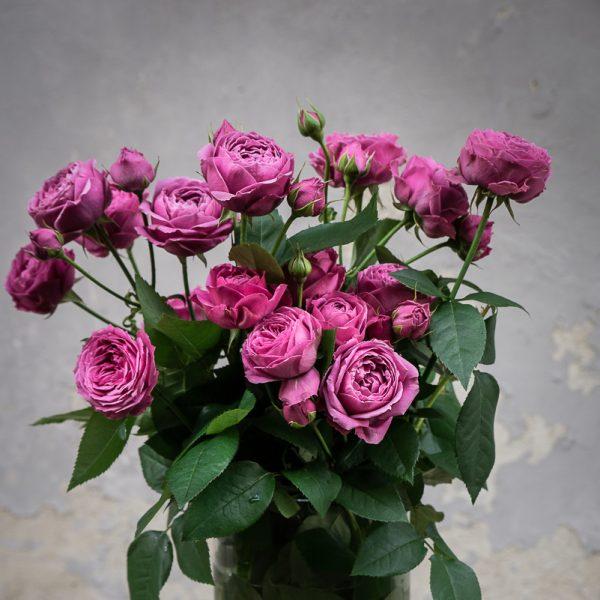 rosa rose spray tr misty bubbles rožės gėlės ir manufaktūra