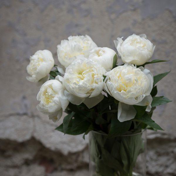 peony bijūnai bijūnas augalas sarah bernhard paeonia gėlės ir manufaktūra duchess nemour