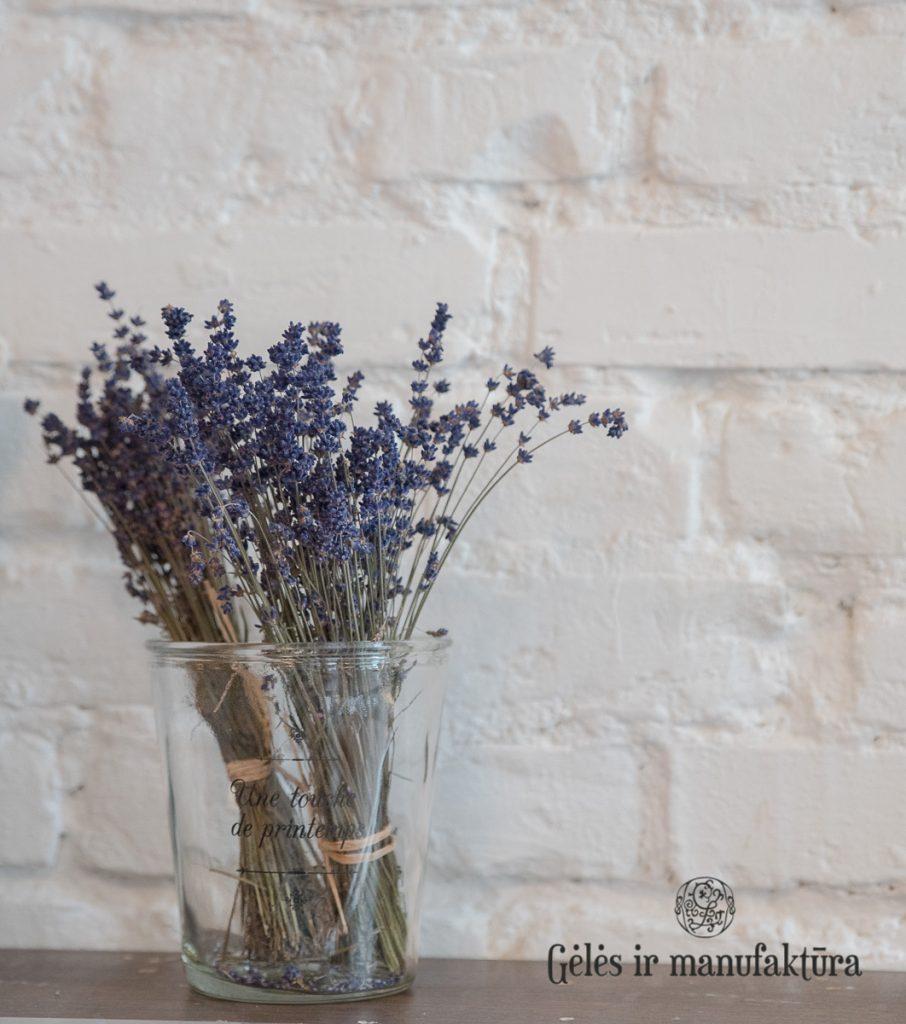 levanda lavendel lavandula angustifolia