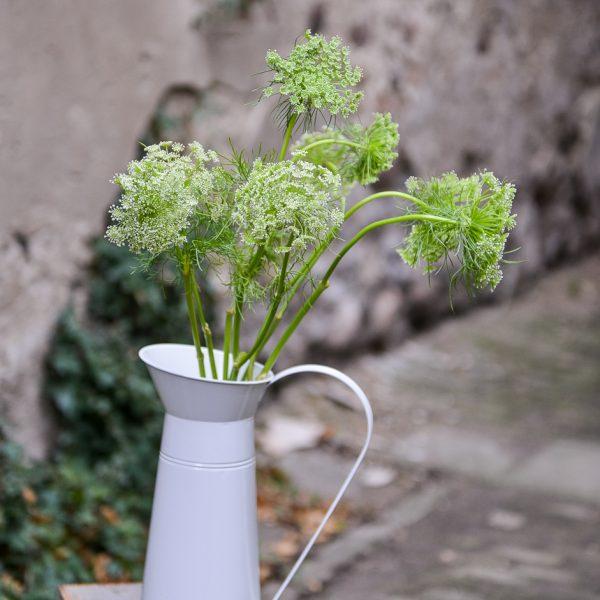 ammi majus amis dantikrapštis spring flowers gėlės ir manufaktūra