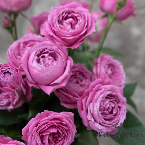 Rosa roses Rožės Misty bubbles flowers gėlės ir manufaktūra