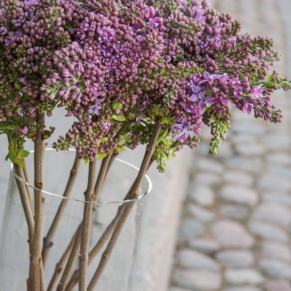 alyvos syringa lilacs flowers gėlės vilniuje skintos