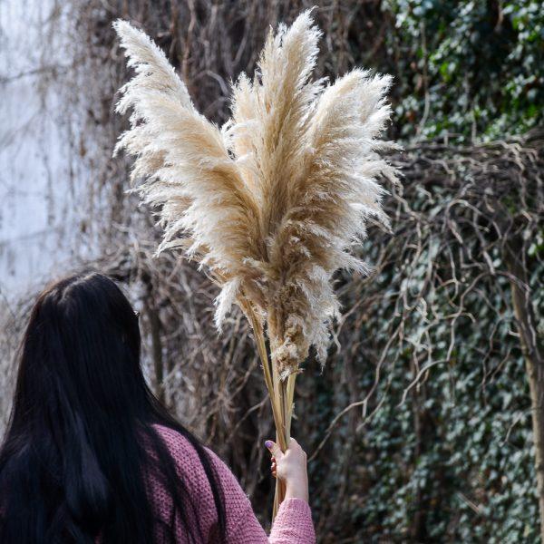 cortaderia pampas grass kortaderija gėlės ir manufaktūra