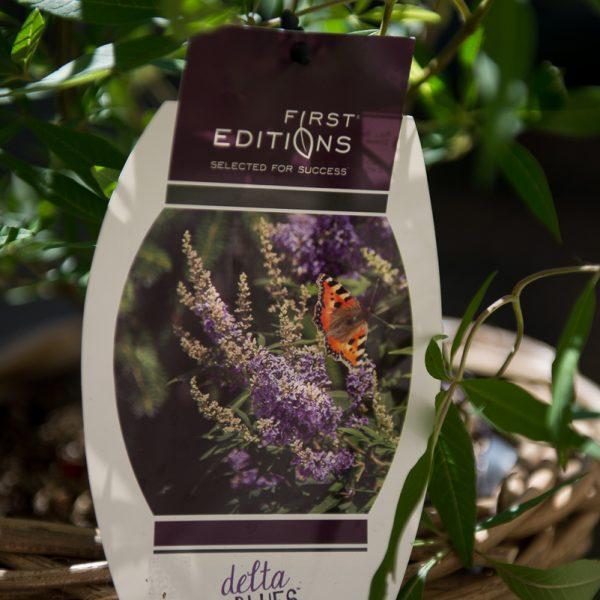 vaistinis augalas skaistminas Chaste tree augalai vitex agnus-castus gėlės ir manufaktūra