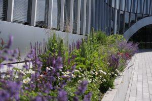 garden perennials plants city naturalistic green hall flowers augalai daugiamečiai gėlės ir manufaktūra
