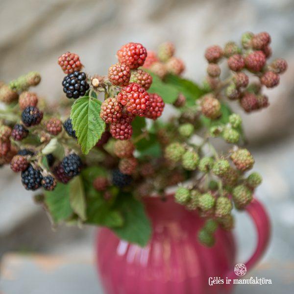 gervuogės blackberry berries flowers uogos avietės gėlės ir manufaktūra