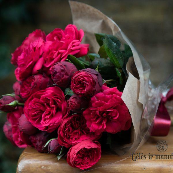 garden rose Out of Rosenheim red raudona sodo bijūninė rožė augalai gėlės ir manufaktūra plants