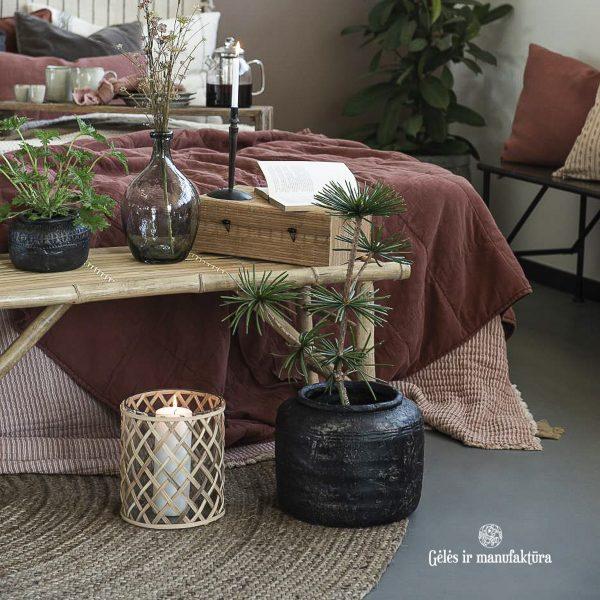 japonine pušis vazonas pots Delphi Caesar sciadopitys verticillata handmade pottery indas vaza sendintas rustic gėlės ir manufaktūra 13109-24 iblaursen kambariniai augalai