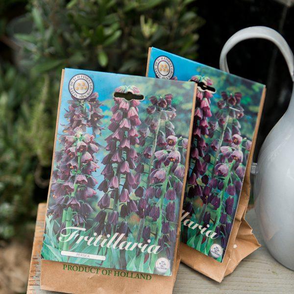 fritillaria persica bulb svogūnas persinė margutė gėlės ir manufaktūra
