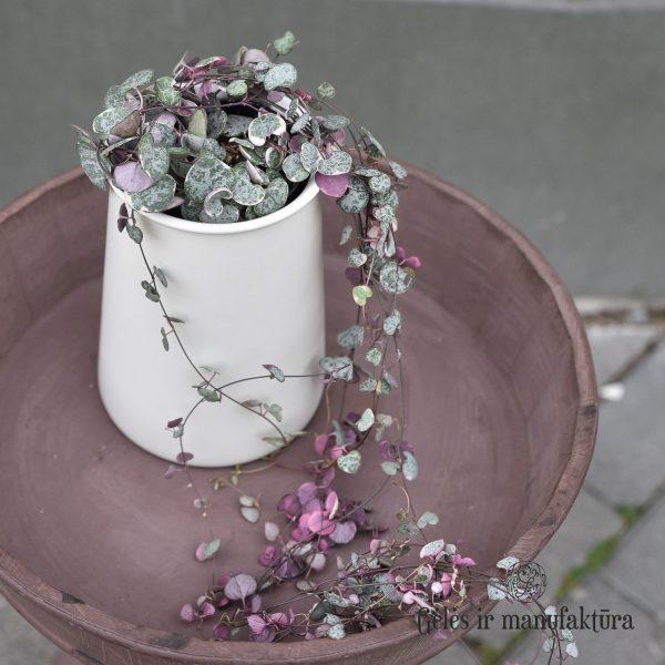 vazonas alessi ceropegia vazone keramikinis pot ceramic vaza vase gėlės ir manufaktūra