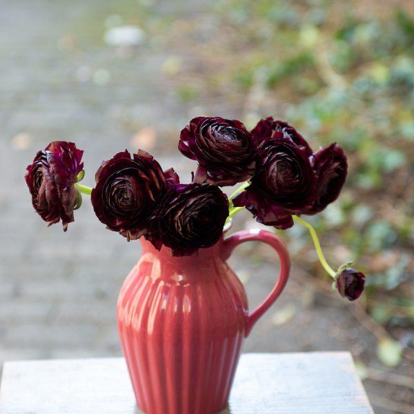 ranunculus vėdrynas juodos bordinės spalvos black nerone buttercup gėlės ir manufaktūra