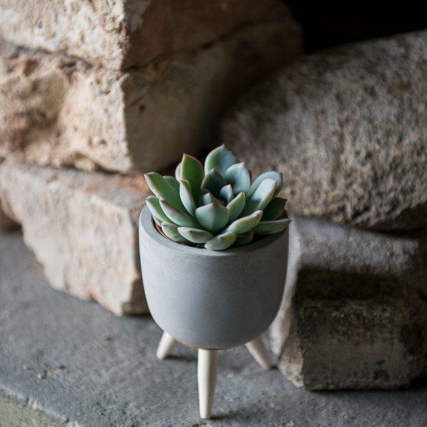 kambariniai augalai vazonai vazonėliai betoniniai cementiniai concrete succulents sukulentas echeveria crassula storlapis kaktusas gėlės ir manufaktūra plants vilnius
