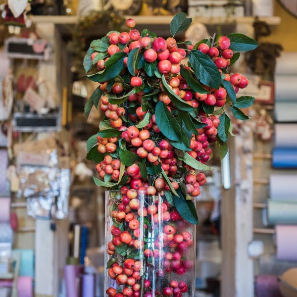 rojaus obuoliukai šakelės malus apple tree gėlės ir manufaktūra